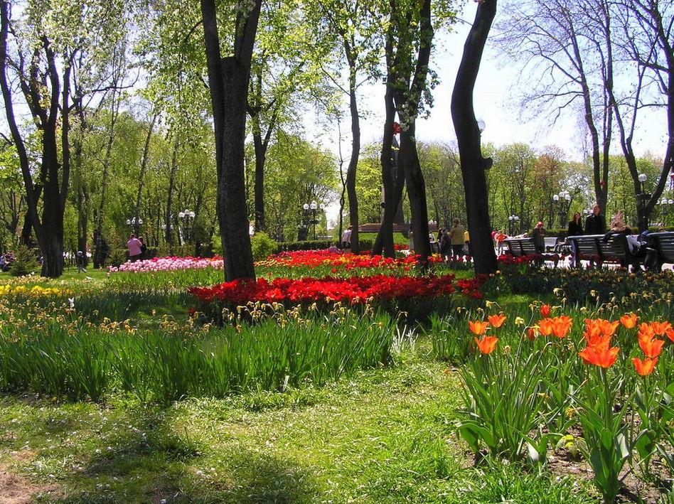 выставка тюльпанов в нашем парке