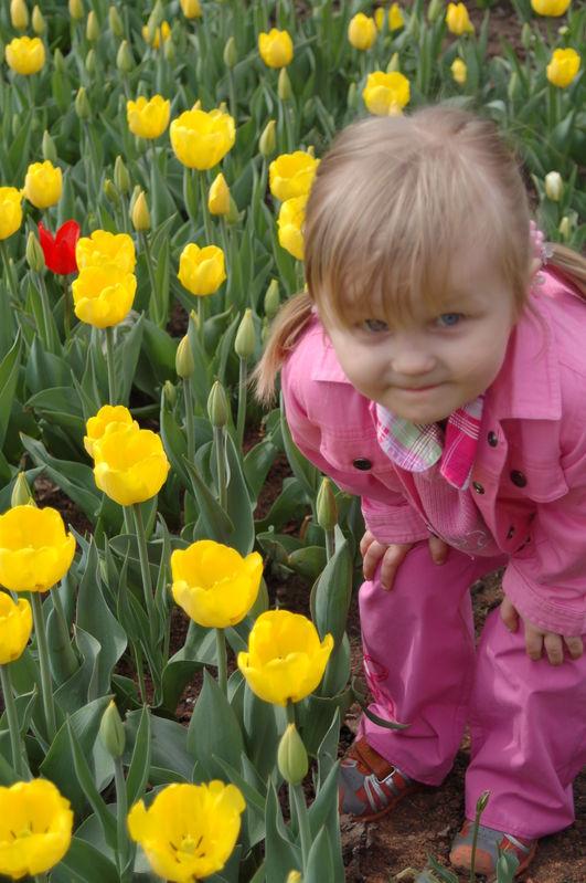 Желтые тюльпаны... ооо...
