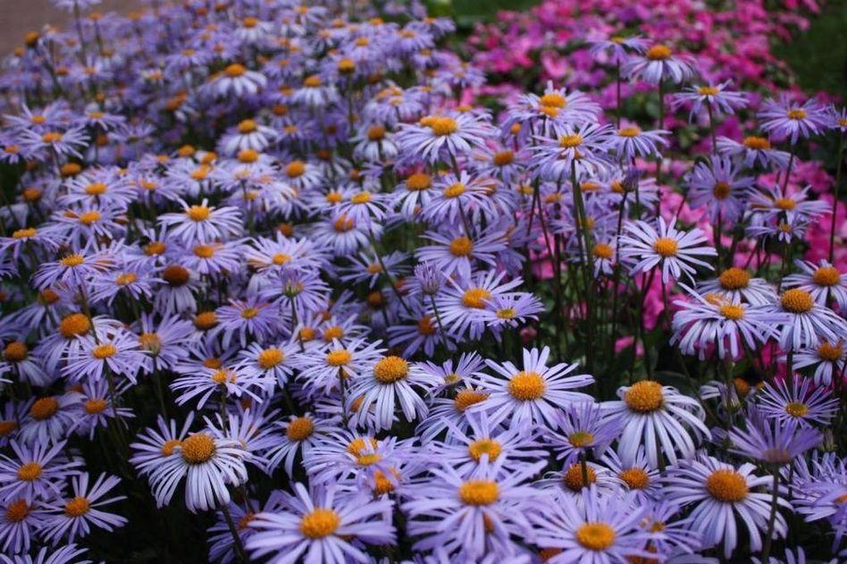 http://statica2.detstvo.ru/foto/original/2008/07/12/32e694ac670fe8925c27783763d3a2d8.jpg