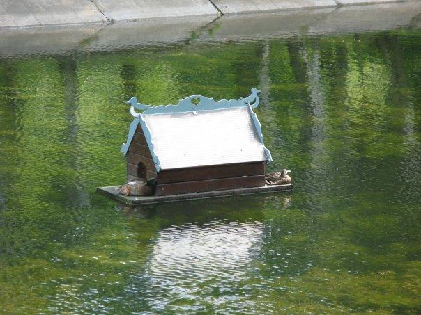 домик для уток (чуть подальше такой же для лебедей) .