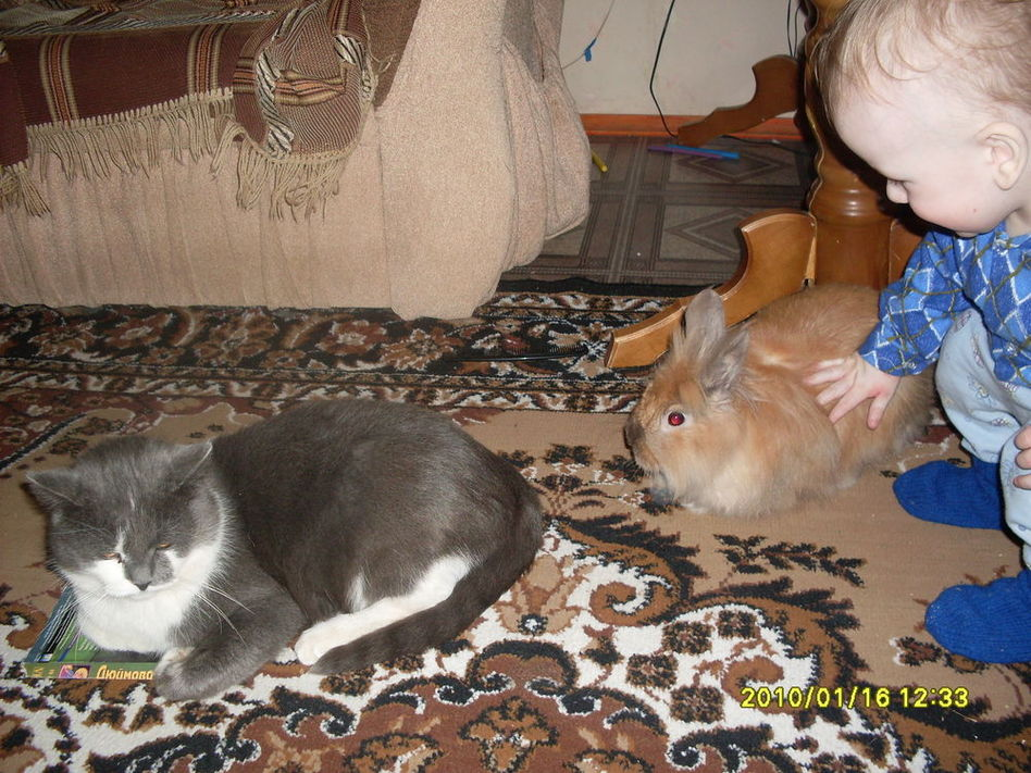 люблю кисок и кроликов