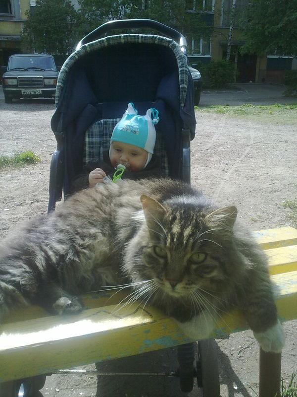 кот Барсик и сыночек