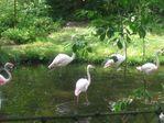 В зоопарке. Фламинго.