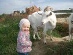 коза рогатая
