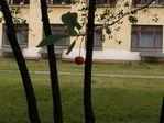 Родильный дом при ГКБ № 70 (Спасо-Перовский госпиталь Мира и Милосердия)