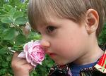 Цветик мой