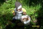 В лес ходи, гуляли и грибы собирали