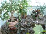 Мои растения!