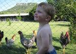 на территории отеля мини-зоопарк с курами,кроликами,павлинами