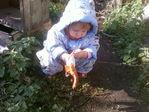 Одену перчатки и на огород