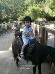 На маленькой лошадке!