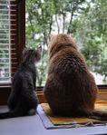 Жили-были два кота,восемь лапок,два хвоста.