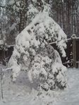 Снежище