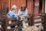 Ферма и зоопарк