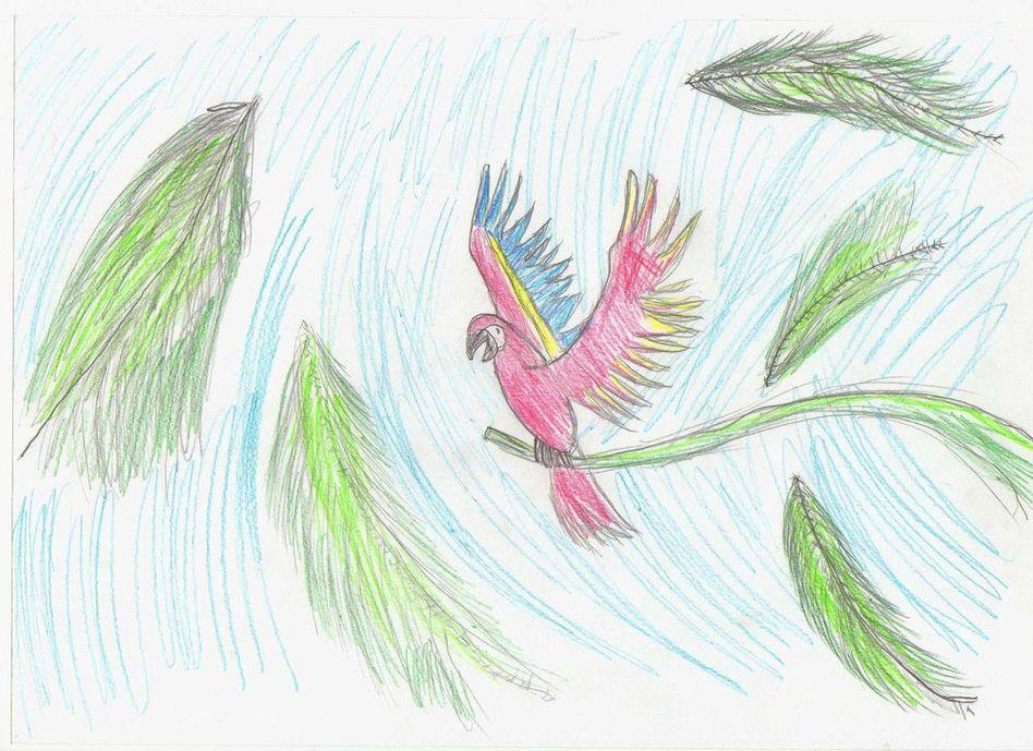 попугай рисунок: